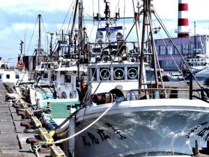 岸壁や物揚場に停泊している船